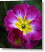 Flower In Spring Metal Print by Deborah Benoit