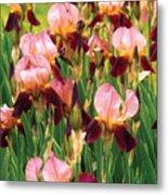 Flower - Iris - Gy Morrison Metal Print by Mike Savad