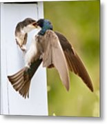 Fly In Meal Metal Print by Carl Jackson
