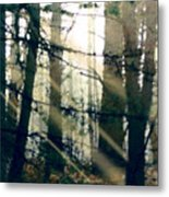 Forest Sunrise Metal Print by Paul Sachtleben