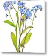 Forget-me-not Flowers On White Metal Print by Elena Elisseeva