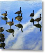 Geese Lake Reflections  Metal Print by Randy Steele