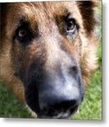 German Shepherd Dog Metal Print by Fabrizio Troiani