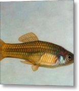 Go Fish Metal Print by James W Johnson