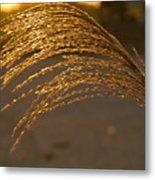 Golden Grass Metal Print by Douglas Barnett