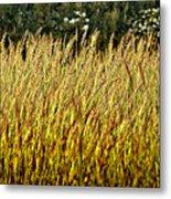 Golden Grasses Metal Print by Meirion Matthias