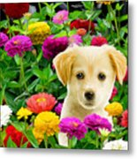 Golden Puppy In The Zinnias Metal Print by Bob Nolin
