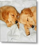 Golden Retriever Dog Puppies Sleeping Metal Print by Jennie Marie Schell