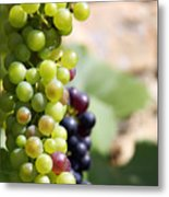 Grapes Metal Print by Jane Rix