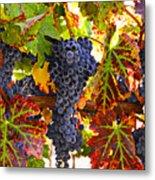 Grapes On Vine In Vineyards Metal Print by Garry Gay