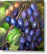 Grapevine Metal Print by Carol Sweetwood