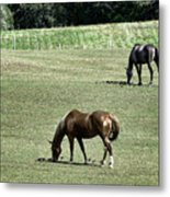 Grazing Horses Metal Print by John Greim