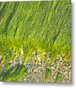 Green Algae On Rock Metal Print by Kenneth Albin