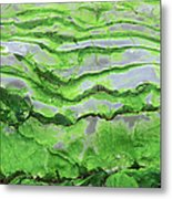 Green Algae Patterns On Exposed Rock At Low Tide, Gros Morne National Park, Ontario, Canada Metal Print by Altrendo Nature