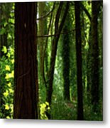 Green Forest Metal Print by Carlos Caetano
