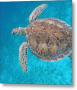 Green In Blue Metal Print by Kimberly Mohlenhoff