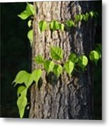Green Leaves At Walden Pond Metal Print by Christina Solstad