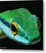 Green Parrot Snake Metal Print by Larry Linton