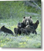 Grizzly Romp - Grand Teton Metal Print by Sandra Bronstein