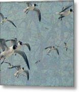 Gulls Metal Print by James W Johnson