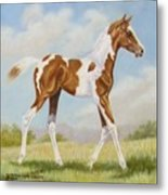 Half Arabian Pinto Filly Metal Print by Dorothy Coatsworth