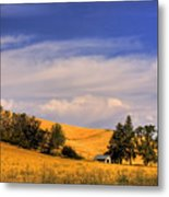Harvested Metal Print by David Patterson