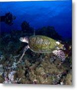 Hawksbill Turtle Swimming With Diver Metal Print by Steve Jones
