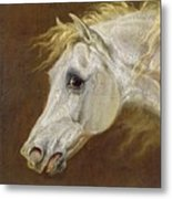 Head Of A Grey Arabian Horse  Metal Print by Martin Theodore Ward