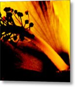 Heat Metal Print by Linda Shafer