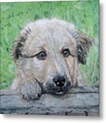 Hello Puppy Metal Print by Yvonne Johnstone