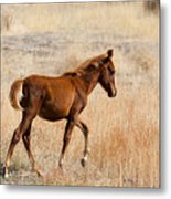 High Stepping Metal Print by Mike  Dawson