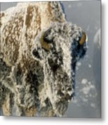 Hoarfrosted Bison In Yellowstone Metal Print by Sandra Bronstein