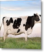 Holstein Dairy Cow Metal Print by Cindy Singleton