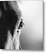 Horse In Black And White Metal Print by Malcolm MacGregor