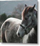 Horse Metal Print by Saulgranda