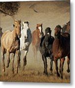 Horses Running Free Metal Print by Heather Swan