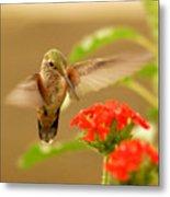 Hummingbird Metal Print by Don Wolf