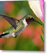 Hummingbird Feeding On Hibiscus Metal Print by DansPhotoArt on flickr