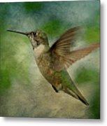 Hummingbird In Flight II Metal Print by Sandy Keeton