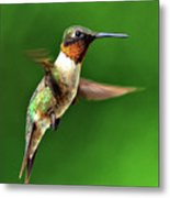 Hummingbird In Mid-air Metal Print by Jeff R Clow