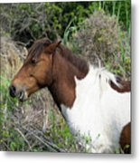 Hungry Horse - Assateague Island - Maryland Metal Print by Brendan Reals