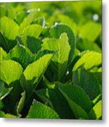 Hydrangea Foliage Metal Print by Gaspar Avila