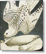 Iceland Or Jer Falcon Metal Print by John James Audubon