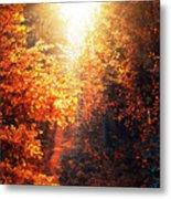 Illuminated Forest Metal Print by Wim Lanclus