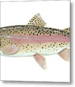 Illustration Of A Rainbow Trout Metal Print by Carlyn Iverson