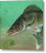Illustration Of A Walleye Swimming Metal Print by Carlyn Iverson