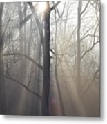 In The Morning Metal Print by Bill Cannon