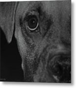 In Your Face Metal Print by DigiArt Diaries by Vicky B Fuller