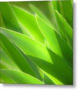 Iris Leaves Metal Print by Utah Images