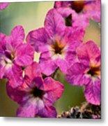 Irridescent Pink Flowers Metal Print by Ryan Kelly